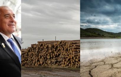 Бойко дърва