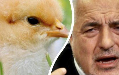 Бойко Пилето