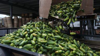 Данъчните проверки ограничиха поскъпването на храните по борсите и тържищата