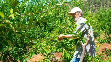 Саудитска Арабия забранява ливанската земеделска продукция